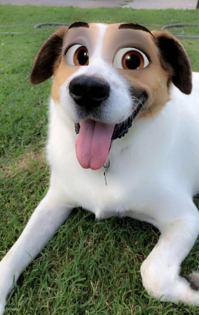 Dàn cún cưng biến thân thành nhân vật Disney cực đáng yêu nhờ hiệu ứng từ Snapchat - Ảnh 7.