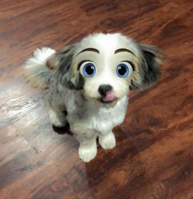 Dàn cún cưng biến thân thành nhân vật Disney cực đáng yêu nhờ hiệu ứng từ Snapchat - Ảnh 8.
