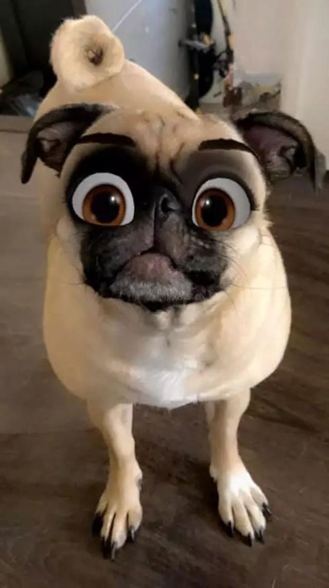 Dàn cún cưng biến thân thành nhân vật Disney cực đáng yêu nhờ hiệu ứng từ Snapchat - Ảnh 9.