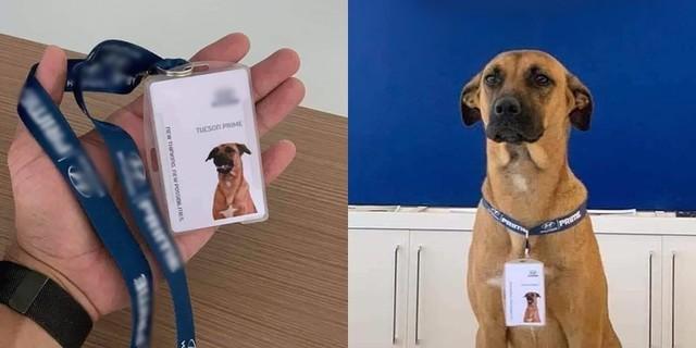 Chú chó được showroom ô tô nhận vào ngày nào giờ đã thăng chức, lên level chuyên viên tư vấn, sở hữu hẳn fanpage trăm nghìn follow - Ảnh 1.