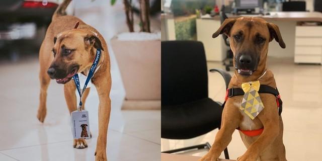 Chú chó được showroom ô tô nhận vào ngày nào giờ đã thăng chức, lên level chuyên viên tư vấn, sở hữu hẳn fanpage trăm nghìn follow - Ảnh 2.