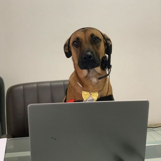 Chú chó được showroom ô tô nhận vào ngày nào giờ đã thăng chức, lên level chuyên viên tư vấn, sở hữu hẳn fanpage trăm nghìn follow - Ảnh 3.