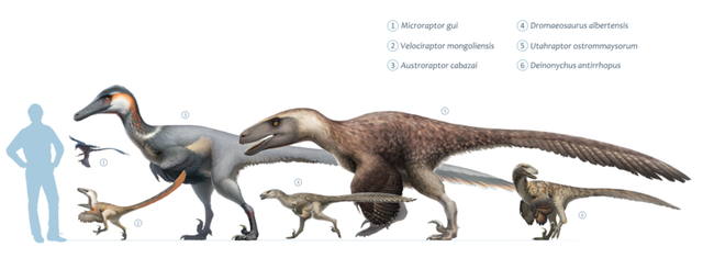 Top 10 loài khủng long nguy hiểm nhất thời tiền sử, khủng long bạo chúa vẫn còn hiền chán - Ảnh 2.