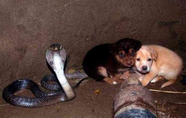 Gặp rắn hổ mang khi trượt ngã xuống giếng, hai chú chó con sợ hãi, run bần bật tưởng hết hy vọng nhưng kỳ tích bất ngờ xuất hiện - Ảnh 3.