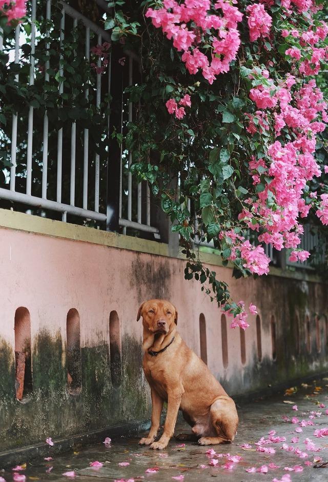 Chú chó ngồi đợi dưới mưa để gặp mặt crush khiến dân mạng bùi ngùi xúc động - Ảnh 1.