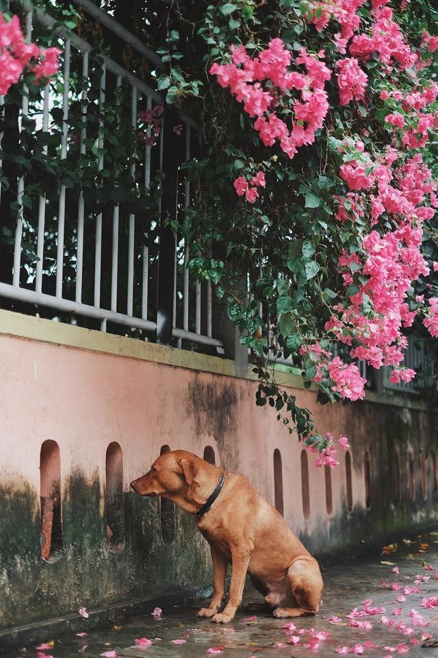 Chú chó ngồi đợi dưới mưa để gặp mặt crush khiến dân mạng bùi ngùi xúc động - Ảnh 2.