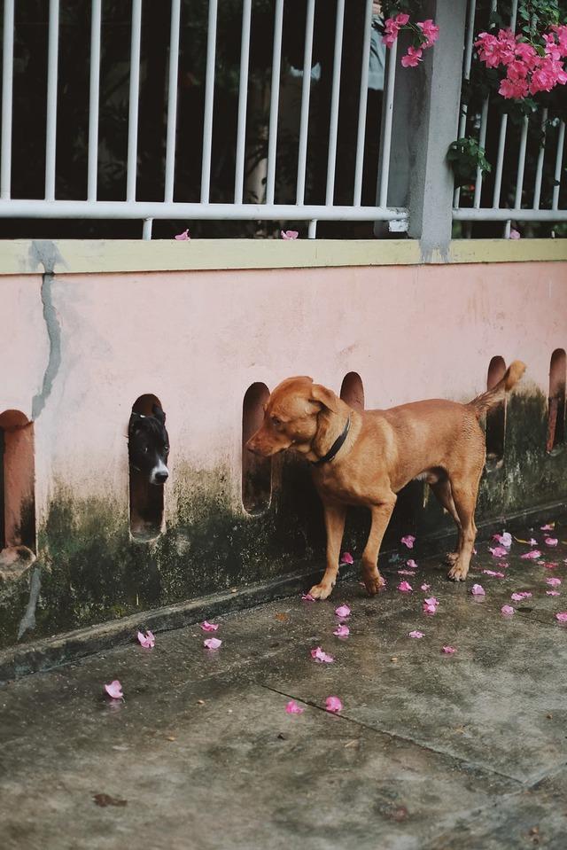 Chú chó ngồi đợi dưới mưa để gặp mặt crush khiến dân mạng bùi ngùi xúc động - Ảnh 3.