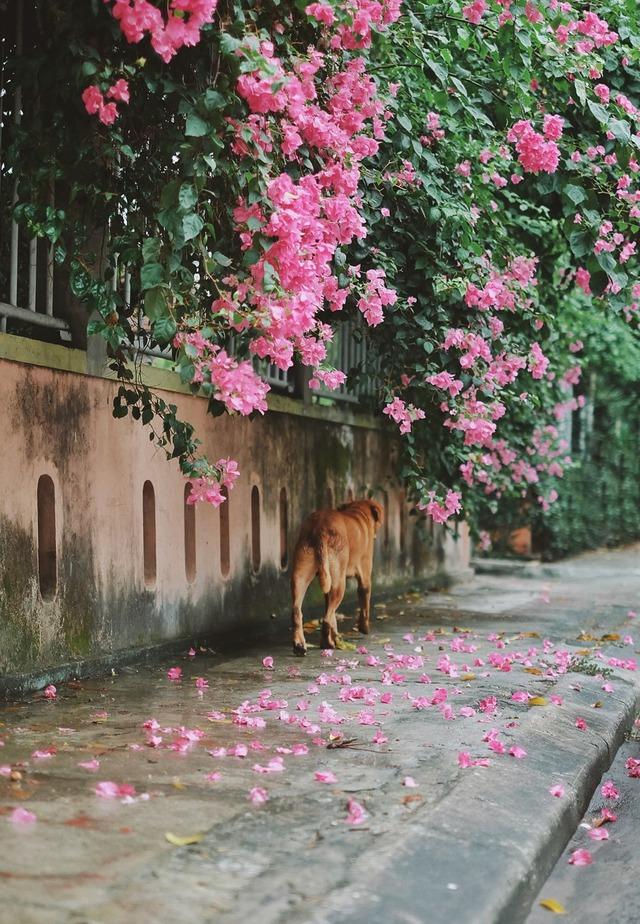 Chú chó ngồi đợi dưới mưa để gặp mặt crush khiến dân mạng bùi ngùi xúc động - Ảnh 4.