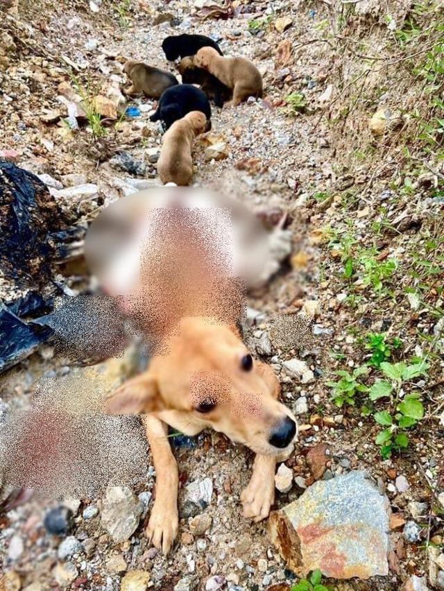 Cảm động chó mẹ liệt hai chân vẫn cố gắng lê lết tìm thức ăn nuôi đàn con khôn lớn - Ảnh 2.