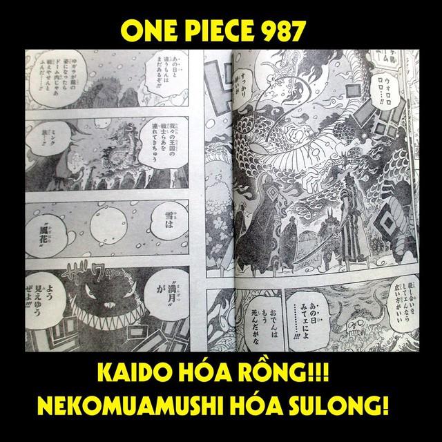 One Piece Chap 987: Kaido hóa rồng, Nekomamushi và cả tộc Mink đều hóa dạng Sulong - Ảnh 1.
