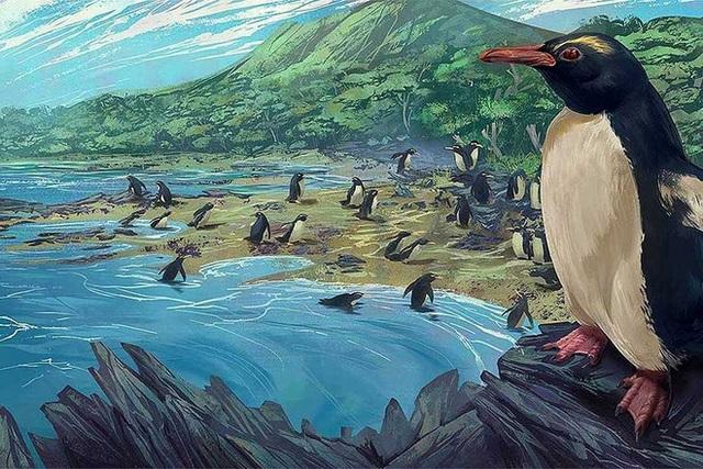 Chim cánh cụt cổ đại cao bằng người từng sống ở lục địa mất tích thứ 8 của Trái Đất - Ảnh 1.