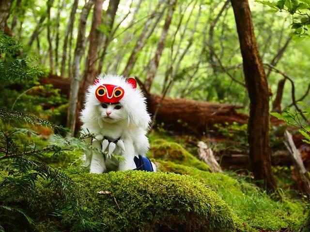Chú mèo bỗng chốc trở thành người nổi tiếng vì được chủ nhân cosplay thành của các nhân vật anime nổi tiếng - Ảnh 1.