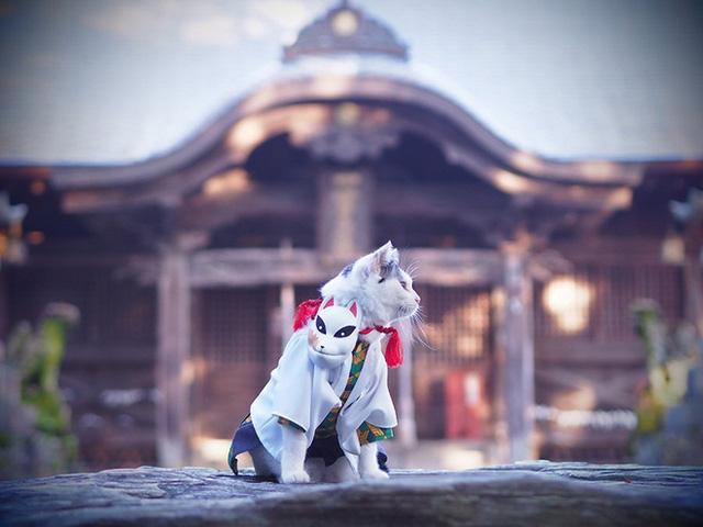 Chú mèo bỗng chốc trở thành người nổi tiếng vì được chủ nhân cosplay thành của các nhân vật anime nổi tiếng - Ảnh 2.