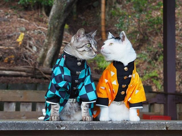 Chú mèo bỗng chốc trở thành người nổi tiếng vì được chủ nhân cosplay thành của các nhân vật anime nổi tiếng - Ảnh 3.