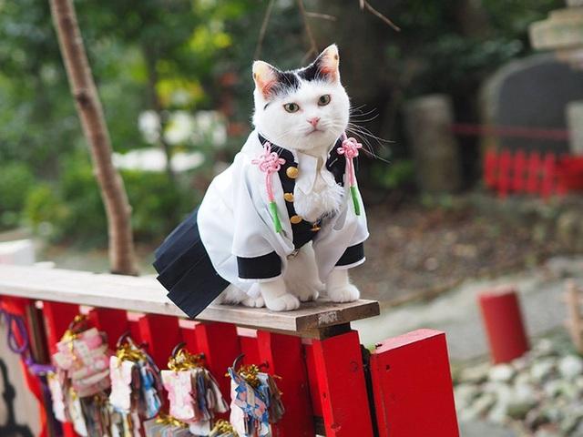 Chú mèo bỗng chốc trở thành người nổi tiếng vì được chủ nhân cosplay thành của các nhân vật anime nổi tiếng - Ảnh 4.
