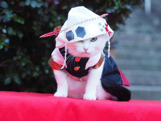 Chú mèo bỗng chốc trở thành người nổi tiếng vì được chủ nhân cosplay thành của các nhân vật anime nổi tiếng - Ảnh 5.