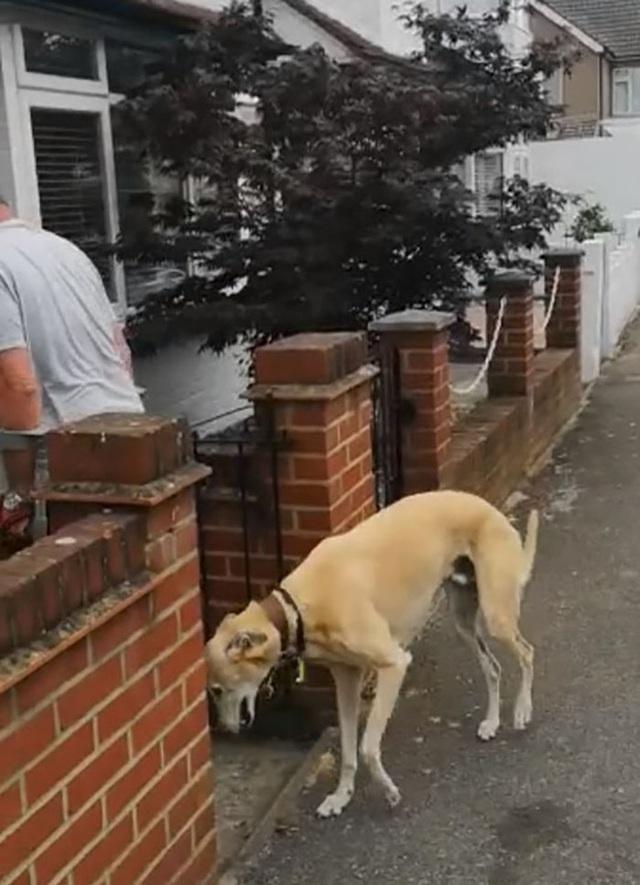 Mất hơn 8 triệu để đưa chó đi bác sỹ thú y, ai ngờ nó chỉ giả vờ què để bắt chước ông chủ bị gãy chân - Ảnh 5.