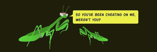 Những con bọ ngựa đực đang tiến hóa để không bị bọ ngựa cái ăn thịt sau giao phối - Ảnh 4.