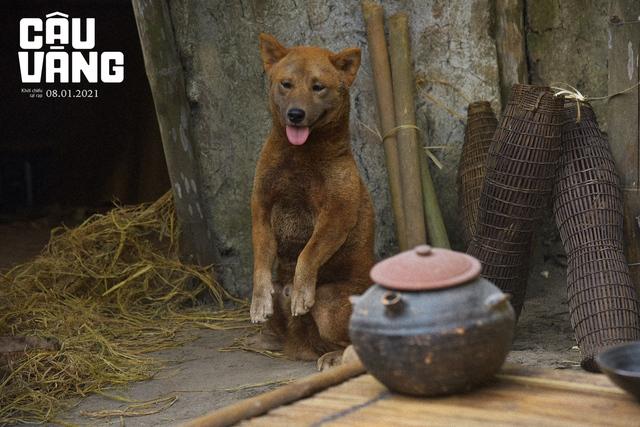 Cậu Vàng - Chú chó đảm nhận vai chính đầu tiên trên phim điện ảnh Việt Nam Photo-3-1609754364148934699911