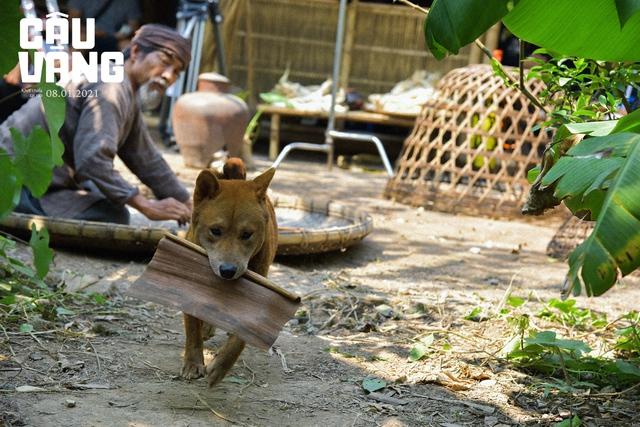 Cậu Vàng - Chú chó đảm nhận vai chính đầu tiên trên phim điện ảnh Việt Nam Photo-4-160975436547286076807