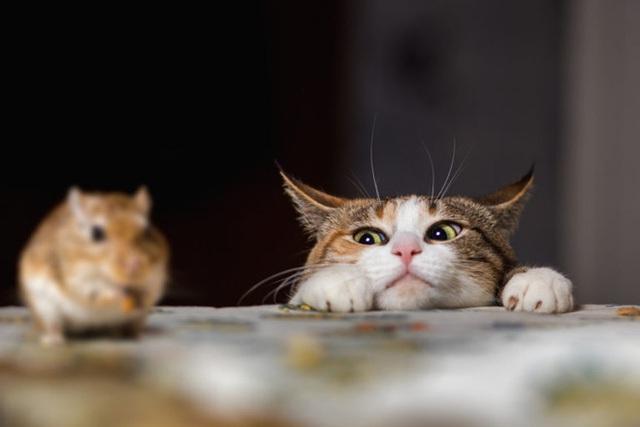 Tìm ra giải pháp khoa học khiến mèo bớt tha mấy con vật chết về nhà - Ảnh 1.
