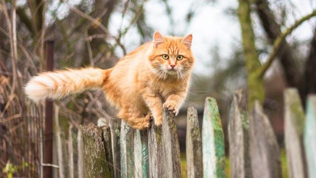Tìm ra giải pháp khoa học khiến mèo bớt tha mấy con vật chết về nhà - Ảnh 3.