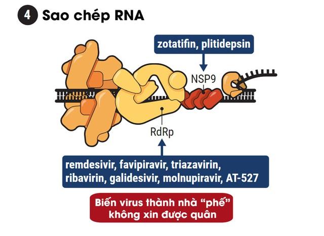 Hiểu cơ chế hoạt động của 5 dòng thuốc COVID-19, từ góc nhìn thú vị của trò chơi Đế Chế - Ảnh 5.