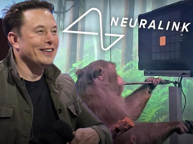 Tận mắt chứng kiến con khỉ của Elon Musk chơi game như người - Ảnh 2.