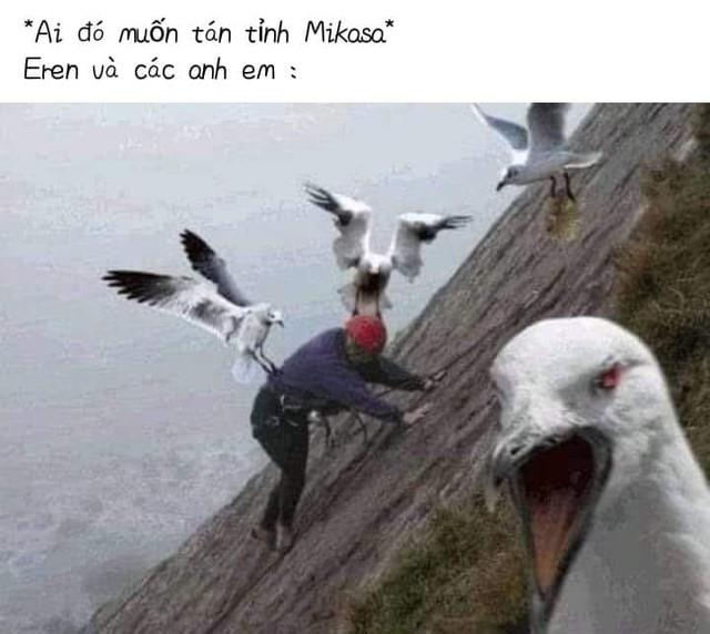 Các fan Attack On Titan cho rằng Mikasa bên cạnh con chim lớn chỉ khiến cô thêm nhớ Eren mà thôi - Ảnh 4.