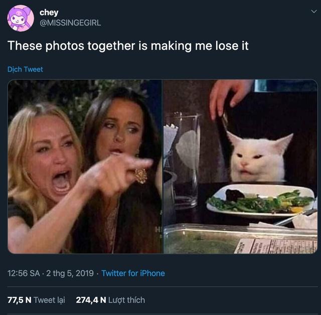 Nguồn gốc những meme ghép chúa hề nổi tiếng MXH, từ cô gái chửi con mèo đến người mẹ và đứa con - Ảnh 1.