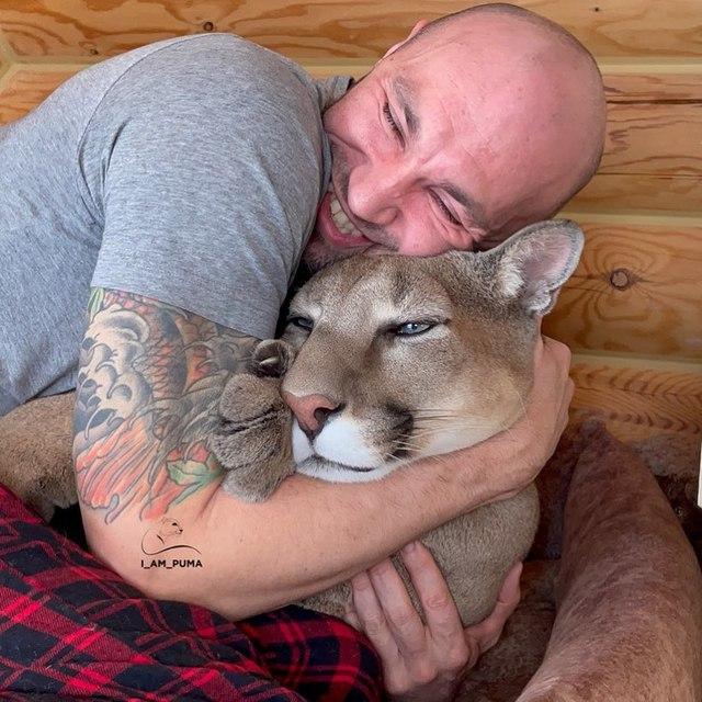 Chán nuôi mèo bình thường, cặp đôi người Nga quyết định nuôi hẳn sư tử núi trong nhà làm thú cưng - Ảnh 3.