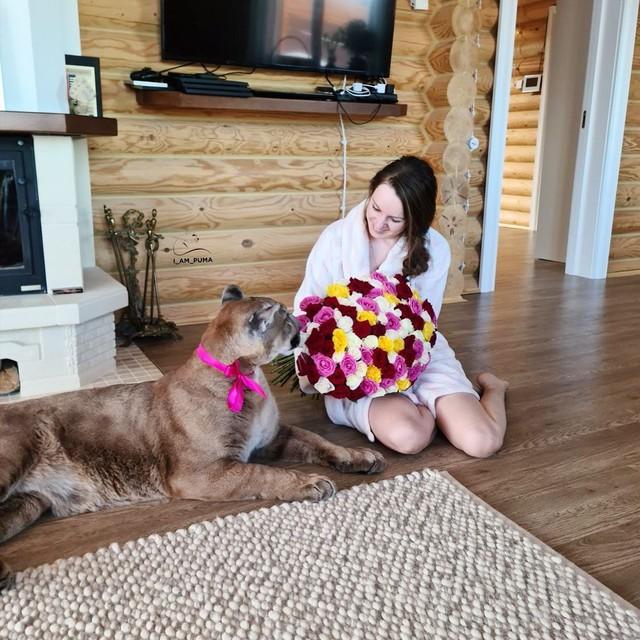 Chán nuôi mèo bình thường, cặp đôi người Nga quyết định nuôi hẳn sư tử núi trong nhà làm thú cưng - Ảnh 2.