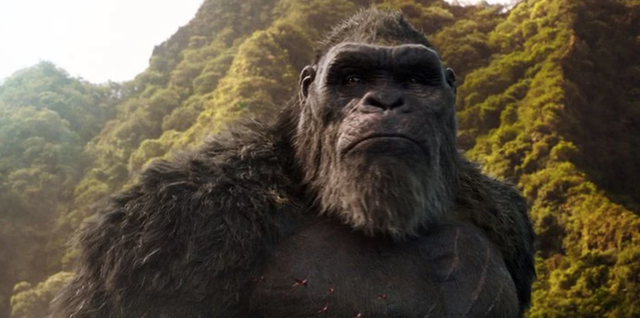 Vì sao trước đây Godzilla chưa từng dằn mặt Kong dù cả 2 đã cùng tồn tại trên Trái Đất trong nhiều thập kỷ qua? - Ảnh 2.