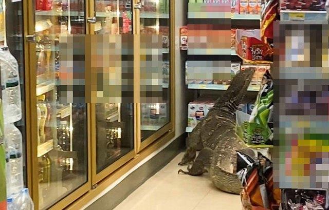 """""""Godzilla"""" phiên bản đời thực Photo-1-1617939387839481705242"""
