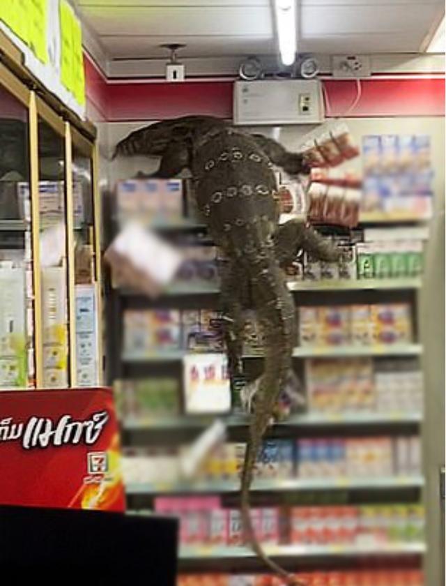 """""""Godzilla"""" phiên bản đời thực Screenshot5-16179395902551720692605"""