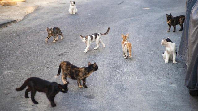 Hơn 1000 con mèo hoang đầu gấu nhất nước Mỹ được đưa đến Chicago để bắt chuột - Ảnh 2.
