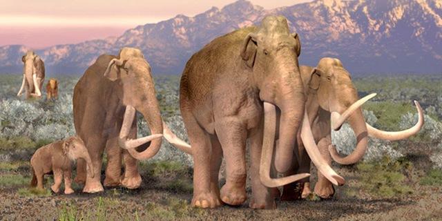 Top 10 loài động vật khủng khiếp nhất mà người tiền sử từng phải đối mặt - Ảnh 1.