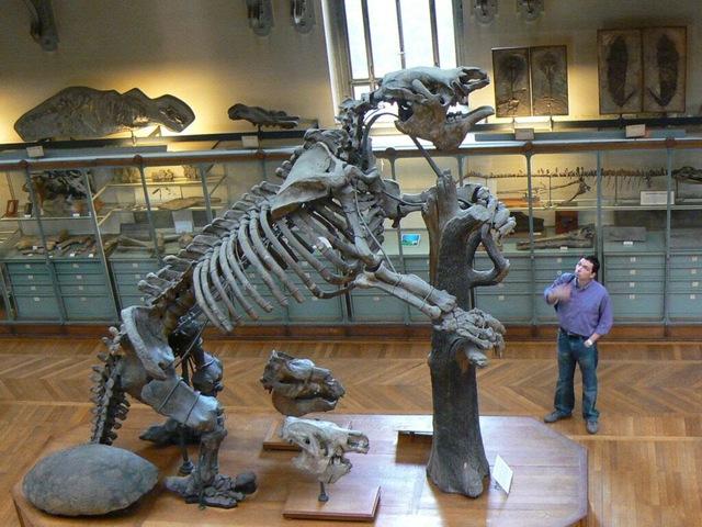 Top 10 loài động vật khủng khiếp nhất mà người tiền sử từng phải đối mặt - Ảnh 4.