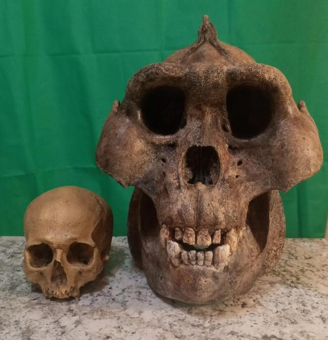 Top 10 loài động vật khủng khiếp nhất mà người tiền sử từng phải đối mặt - Ảnh 6.
