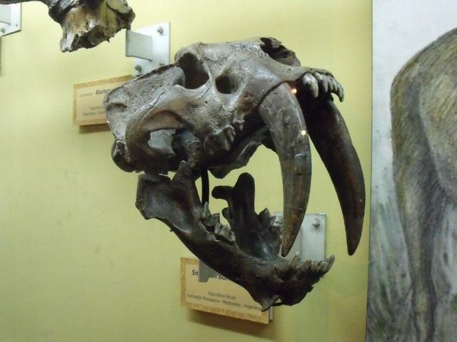 Top 10 loài động vật khủng khiếp nhất mà người tiền sử từng phải đối mặt - Ảnh 10.