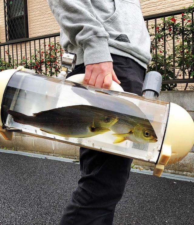 Người Nhật phát minh ra bể di động để dắt cá đi chơi, tưởng vô dụng nhưng lại cháy hàng mới lạ - Ảnh 2.