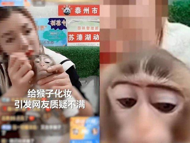 Trang điểm cho khỉ trên sóng để quảng cáo bán kem trộn, mỹ phẩm, nữ streamer khiến CĐM phẫn nộ - Ảnh 1.