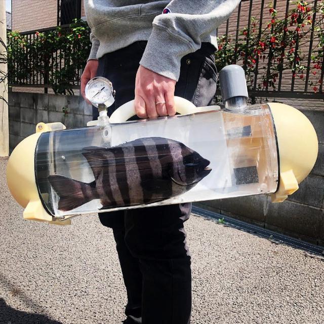 Người Nhật phát minh ra bể di động để dắt cá đi chơi, tưởng vô dụng nhưng lại cháy hàng mới lạ - Ảnh 3.