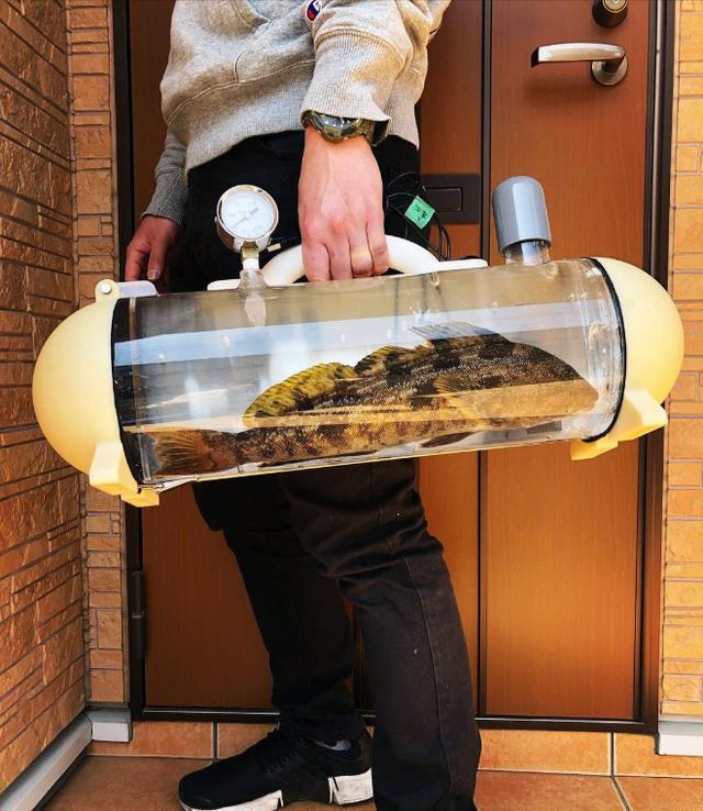 Người Nhật phát minh ra bể di động để dắt cá đi chơi, tưởng vô dụng nhưng lại cháy hàng mới lạ - Ảnh 5.