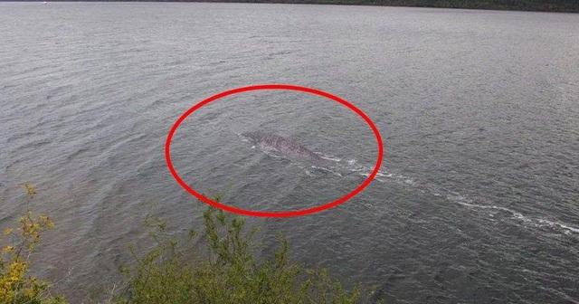 Quái vật hồ Loch Ness: Thực sự có thật hay là trò lừa bịp của loài người? - Ảnh 3.