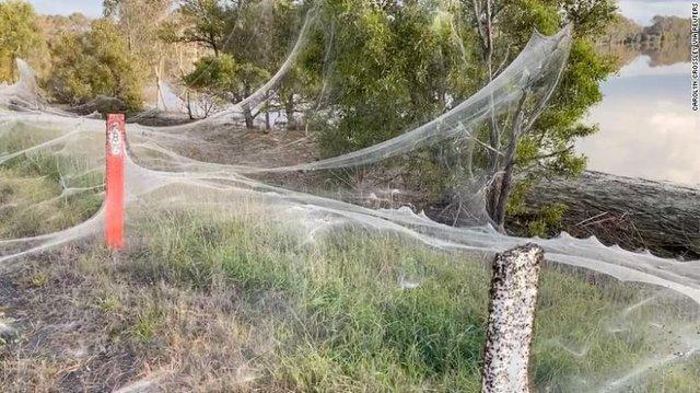 Cảnh tượng như game kinh dị lại tái diễn, hàng triệu con nhện cùng xuất hiện - Ảnh 1.