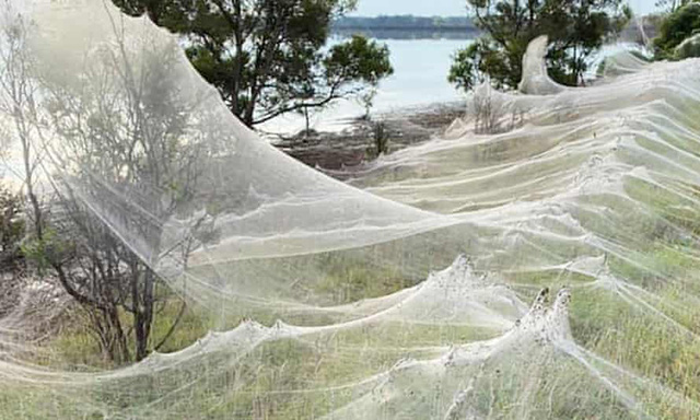Cảnh tượng như game kinh dị lại tái diễn, hàng triệu con nhện cùng xuất hiện - Ảnh 4.
