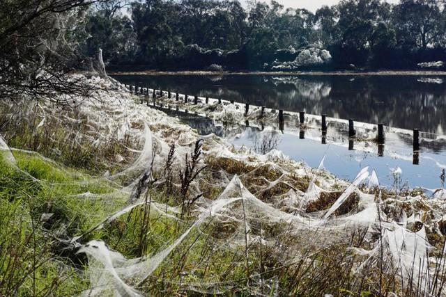 Cảnh tượng như game kinh dị lại tái diễn, hàng triệu con nhện cùng xuất hiện - Ảnh 6.