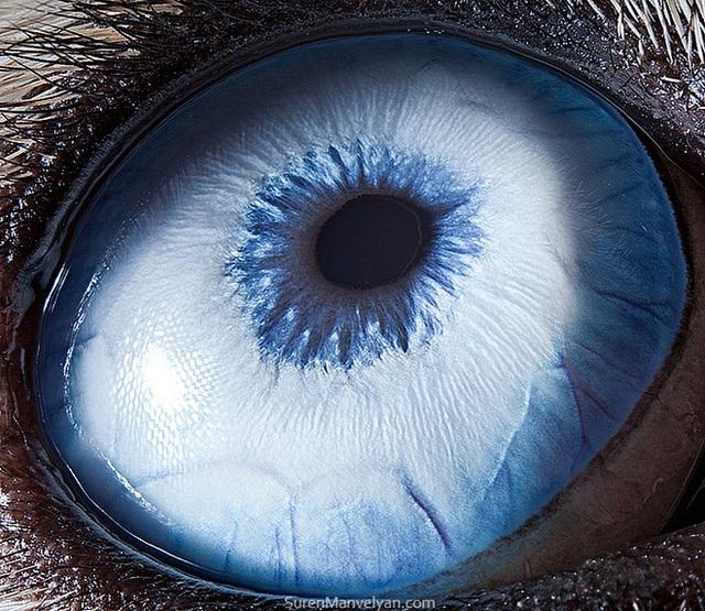 Giật mình trước vẻ đẹp kỳ lạ đến từ mắt của các loài động vật - Ảnh 2.