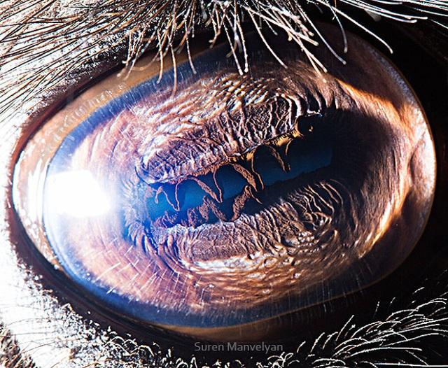 Giật mình trước vẻ đẹp kỳ lạ đến từ mắt của các loài động vật - Ảnh 11.